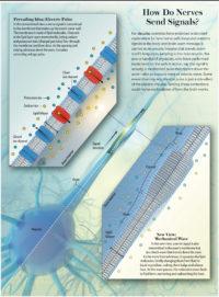 falconieri visuals scientific american