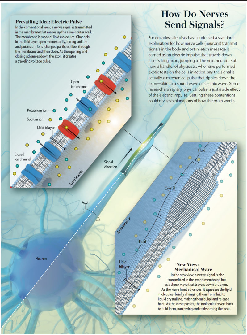 falconieri visuals scientific american