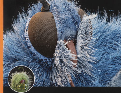 Eye of Science Captures Metamorphosis Using SEM