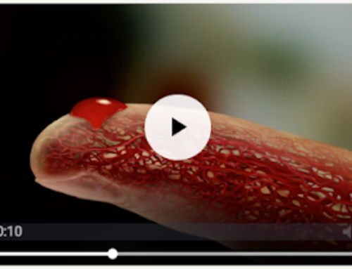 The Fascinating Journey of Blood Through Your Body