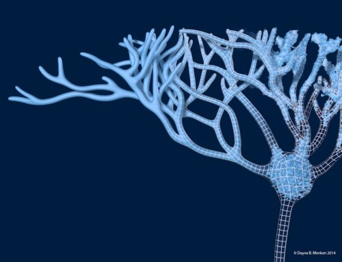 Designer BioMed Creates 3D Reconstructed Neuron Model