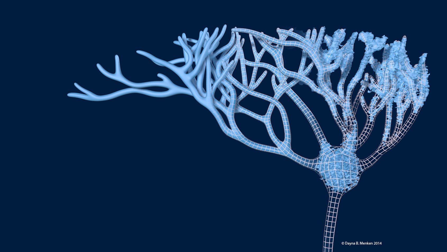 Designer BioMed 3D Neuron Model