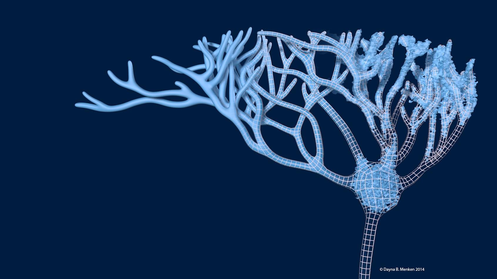 Designer BioMed 3D Neuron Model