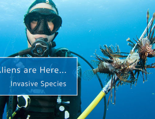 The Aliens are Here: Invasive Species
