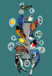 Justine Lee Hirten Project Feederwatch Illustration