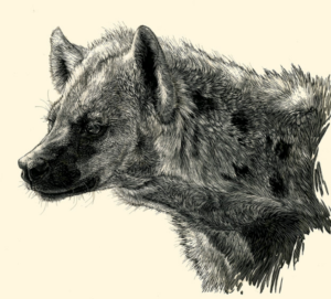 Justine Lee Harten Spotted Hyena Illustration