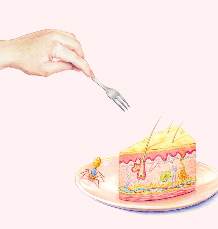 Emma Cheng - Skin Layer Cake Illustration