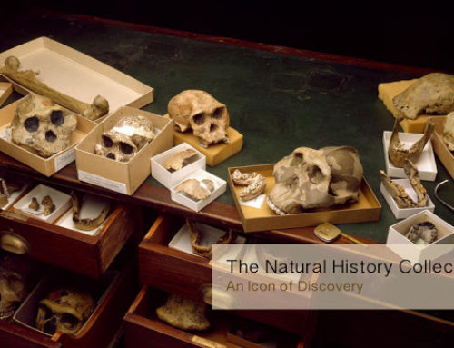 The Natural History Collection