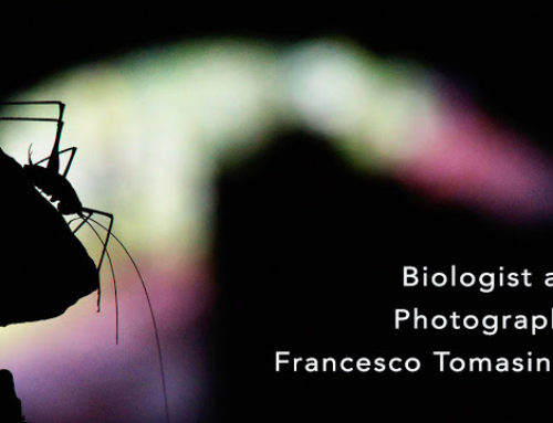 The Beautiful Creepy Crawly World of Francesco Tomasinelli