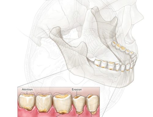 7 Medical Illustrations Highlighting Dentistry