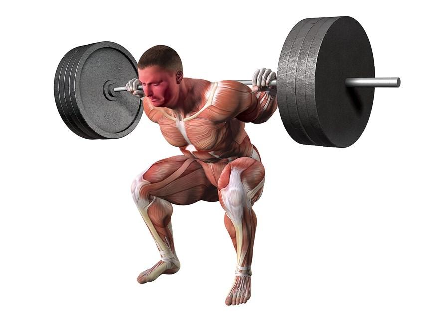 Weightlifting Squat anatomy illustration Epic Studios