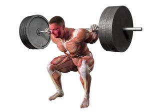Epic Studios Weightlifting Squat Anatomy