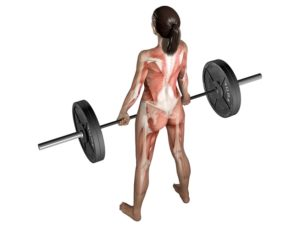 Epic Studios Weightlifting Anatomy for Deadlifts Illustration