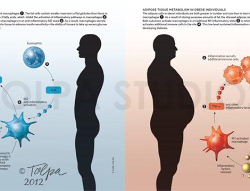 Infographics by Tolpa Studios