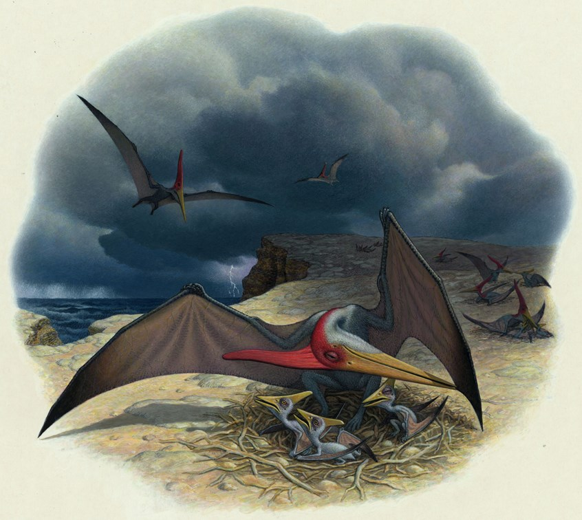 Pteranodon and Nestlings by Anne Sharp Illustration