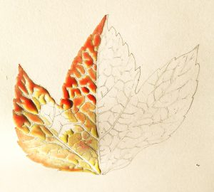 Leaf botanicalillustration illustration autumn fall colour nature
