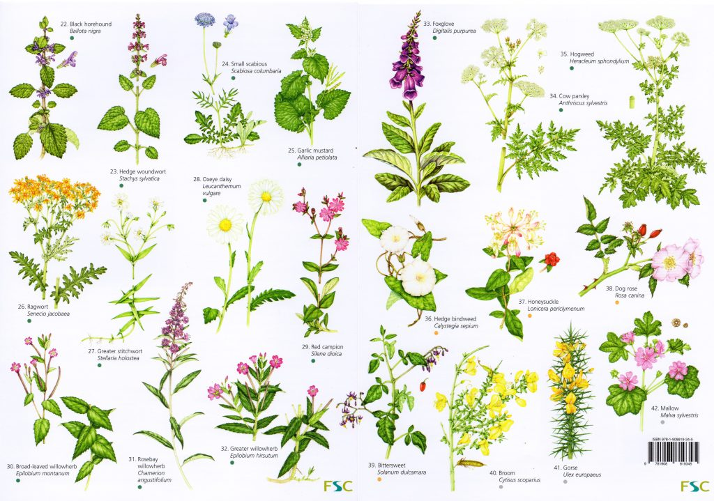 Flower Shapes: Terminology