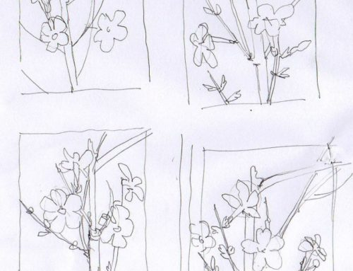 Step by Step winter jasmine sketchbook study