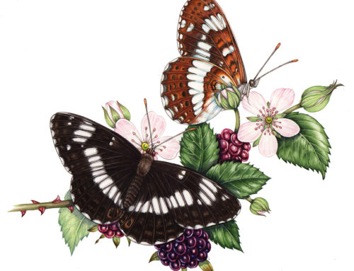Save our Butterflies: Gardening for butterflies (2 of 2)