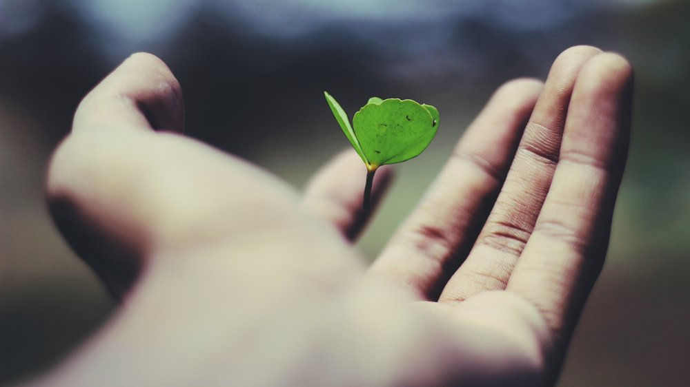 """"""" Life is growth . If we stop growing, technically and spiritually, we are as good as dead."""" Morihei Ueshiba"""