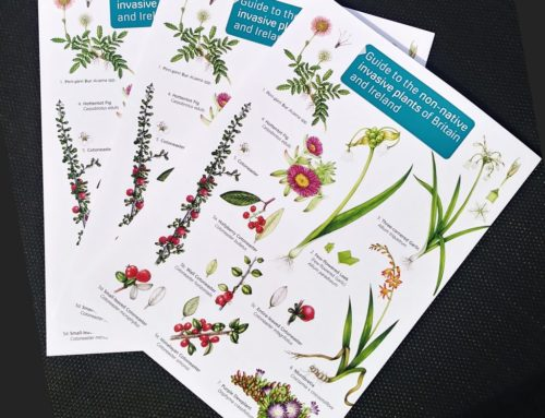 Botanical illustrations for Non-native invasive plants chart