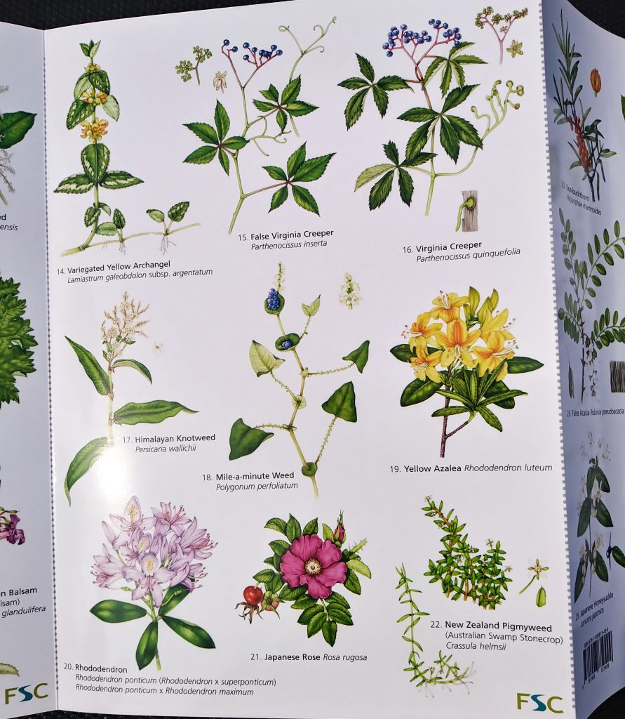 Field studies council non native invasive plants of Britain chart