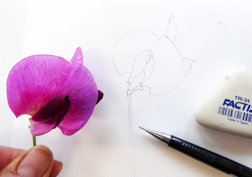 Set up with flower and pencil