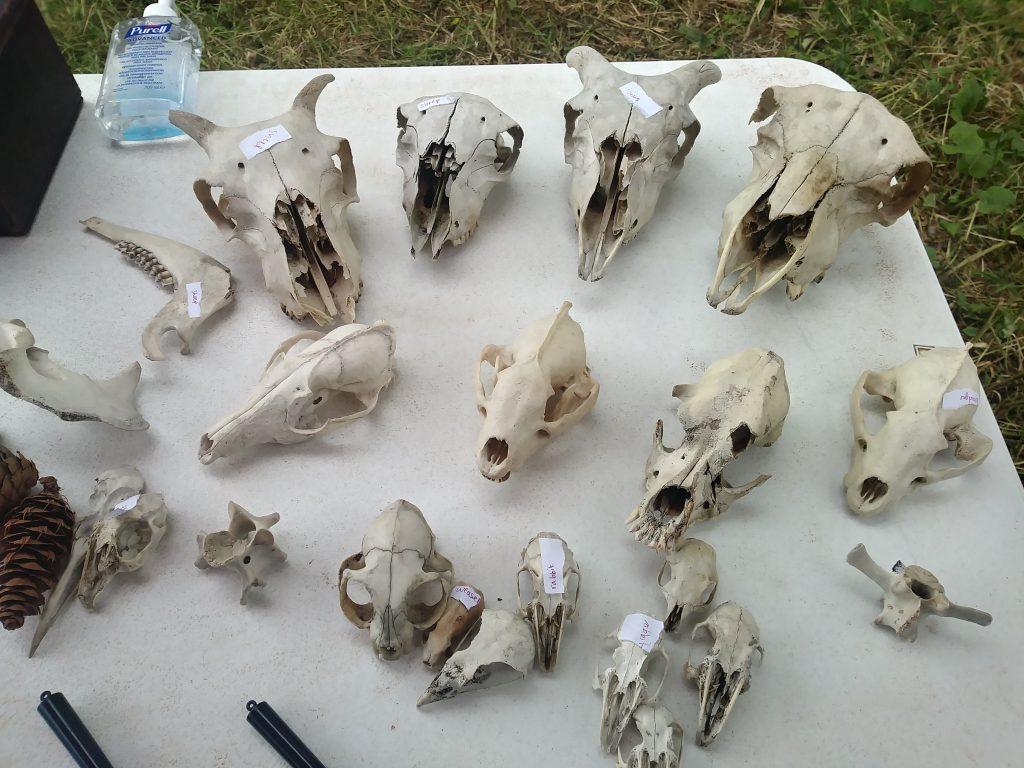 skulls at hay festival