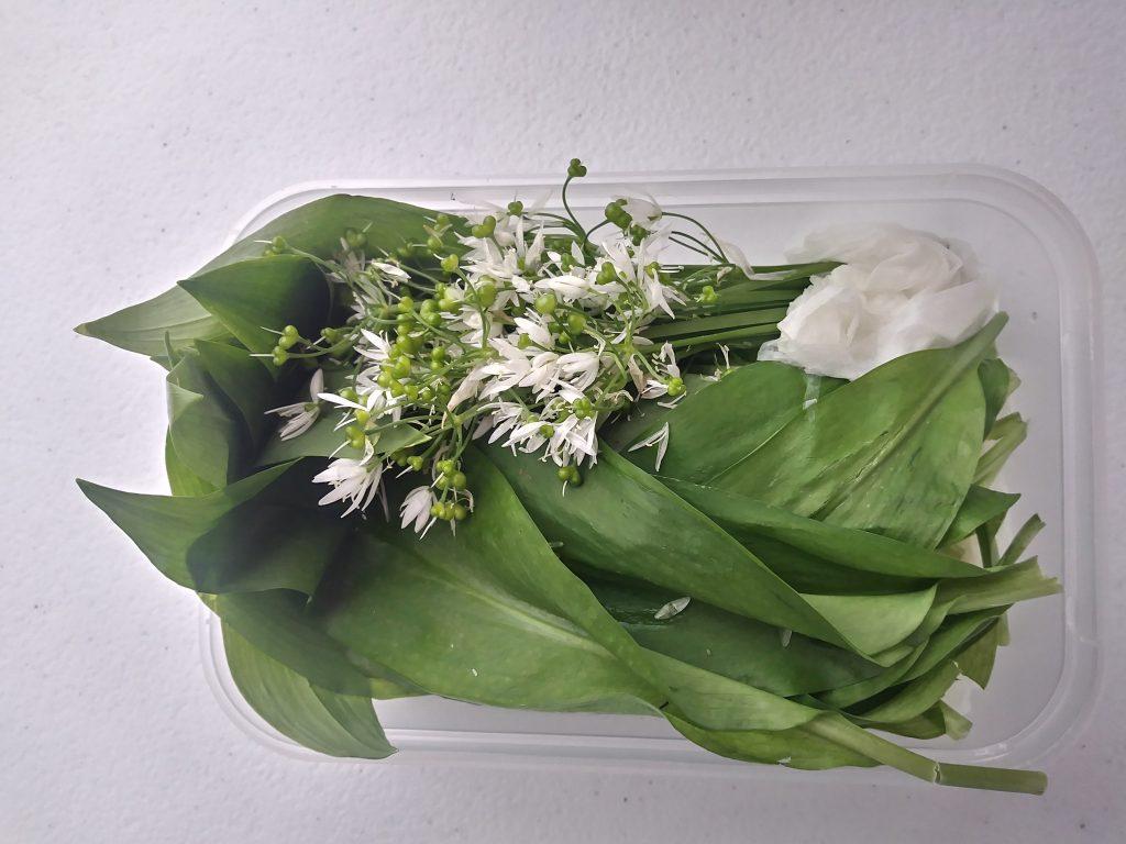 WIld garlic to eat at Hay festival workshop