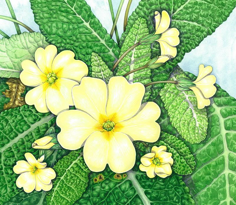 neutral tints on a primrose