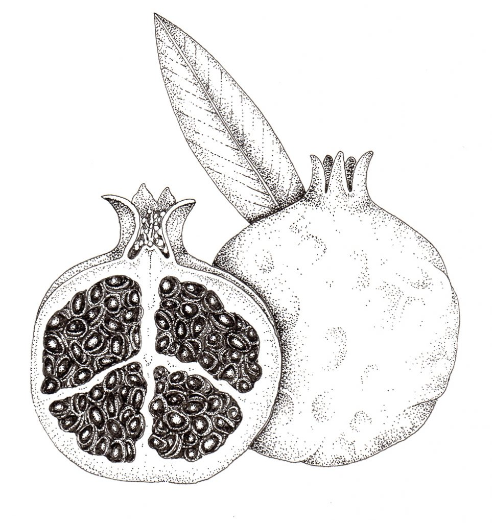 Pen and Ink Illustrations of Tree Details