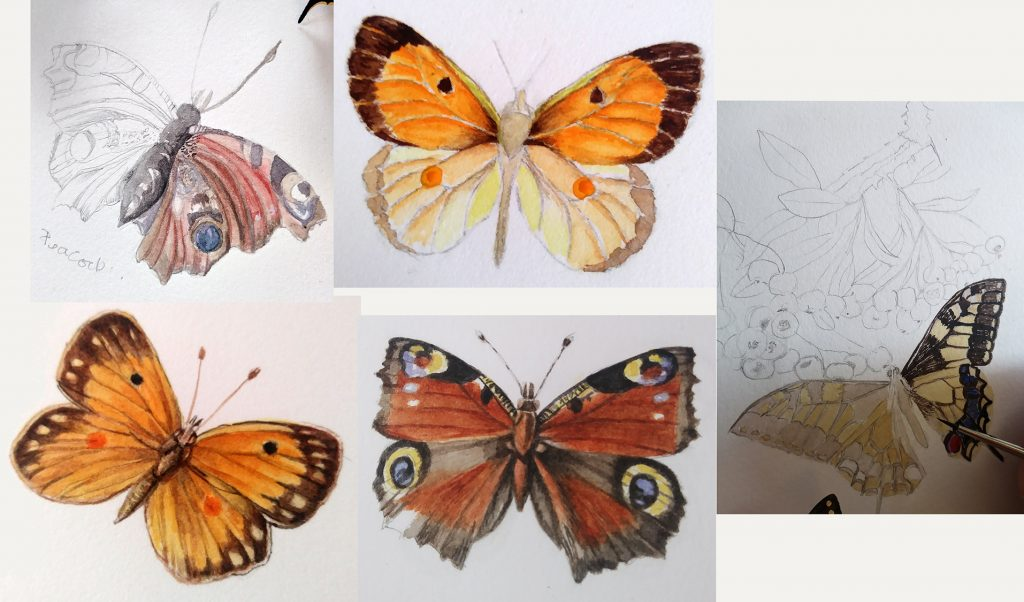 illustrating butterlfies