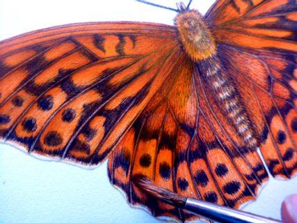 illustrating butterflies