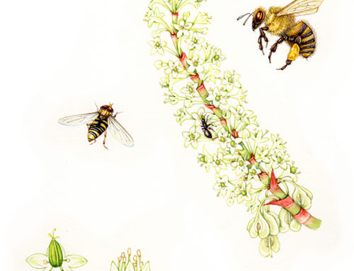 Save the Bees: How to Make Your Garden a Bee Haven