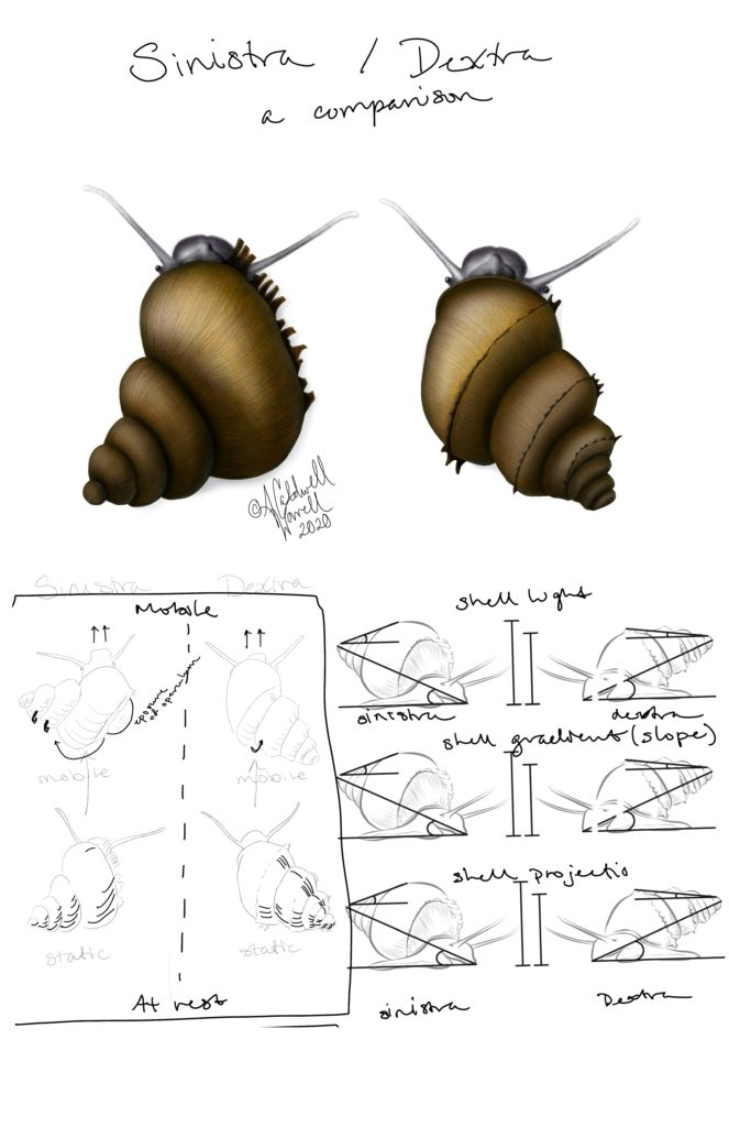 Snail Poster Layout Idea 2