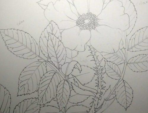 Botanical Illustration of Rose Leaves
