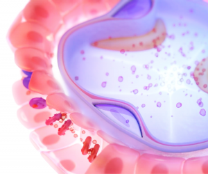 This image is a shot from one of Trinity's medical biological animation microscopic elements representing the alveoli, capillaries, blood cells, oxygen, and carbon dioxide allow viewers to visualize and understand complicated processes such as diffusion rendered from Trinity Animation's 3D software. This is a close-up shot of a microscopic cell that is displayed in vibrant pinks and purples including blood cells flowing through the tubes.