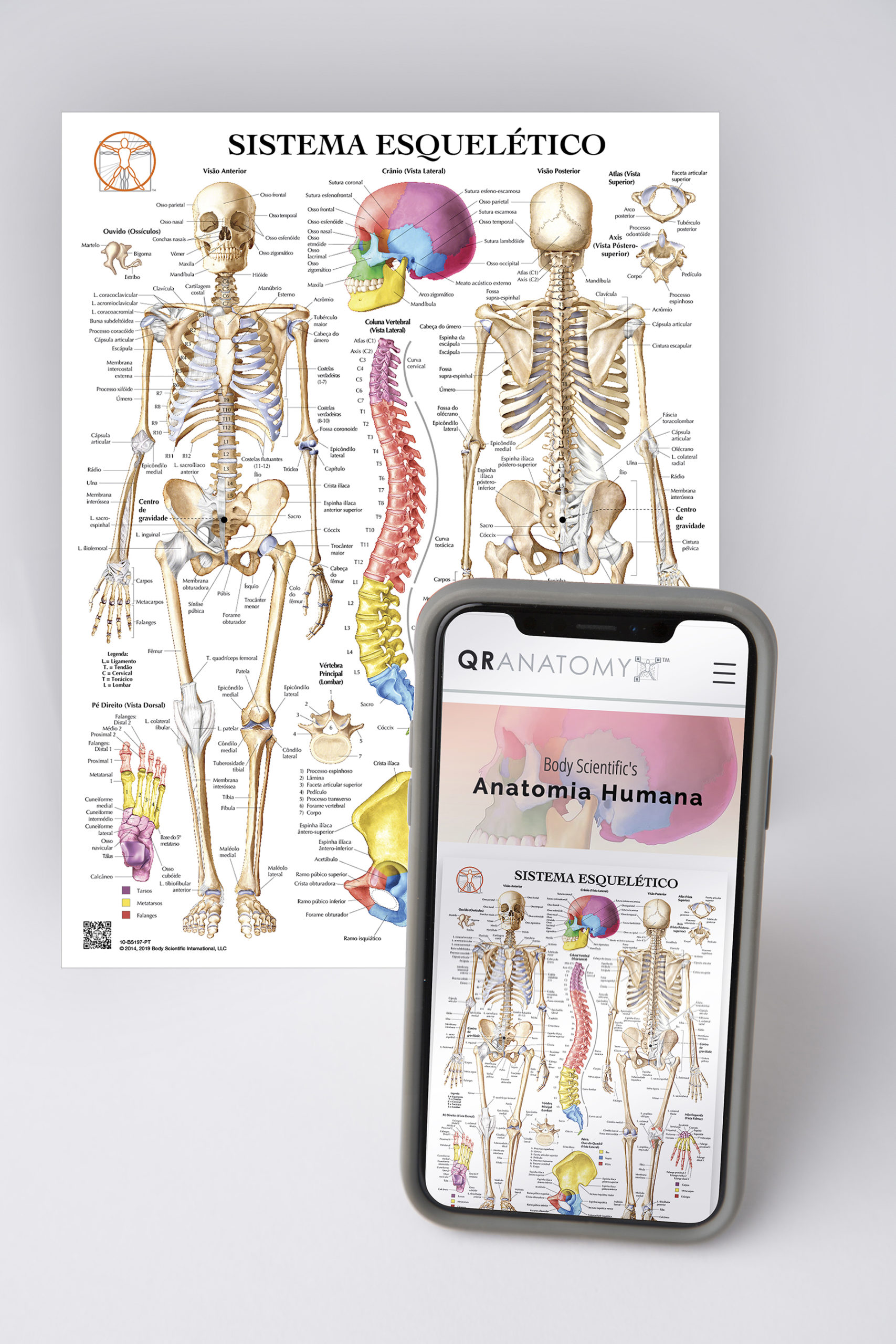 QR iphone in front of anatomy diagram