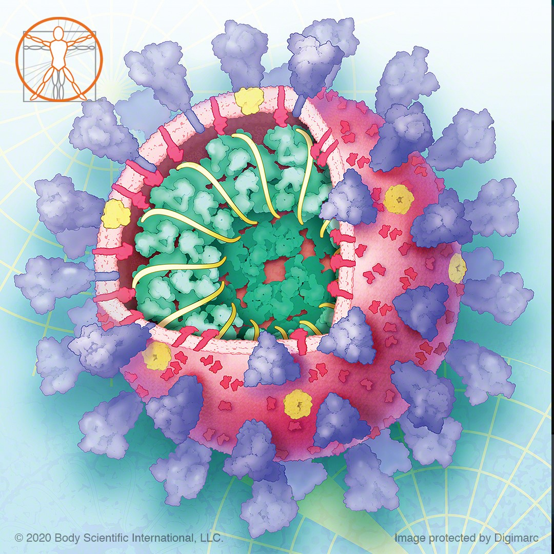Illustration of sars-cov-2 virus