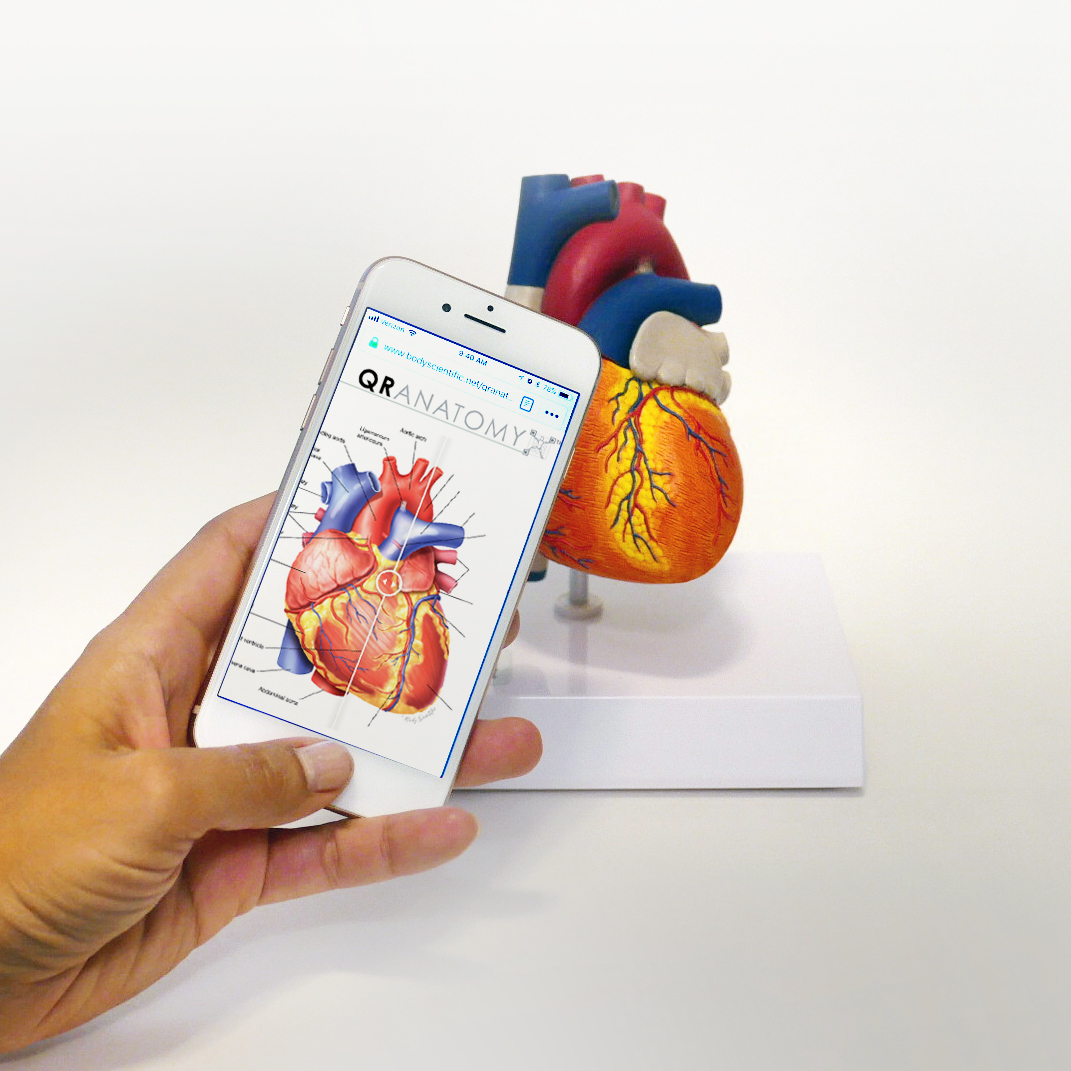 QR heart on a phone in front of a hear model