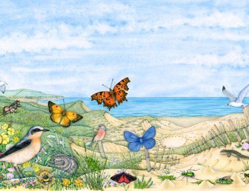 Butterflies of Bentham Sand dunes