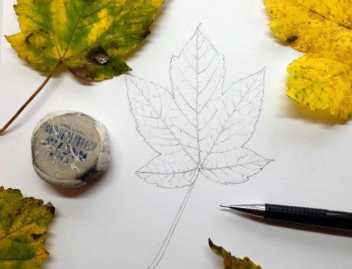 Botanical Illustration of a Sycamore Leaf