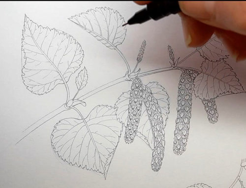 Step by step Downy Birch leaves