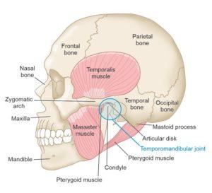 Temporomandibular joint Tina Pavlatos