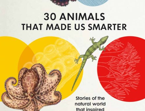 """Illustrations for """"30 animals that made us smarter"""""""